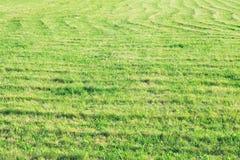 campo verde, rastros de una máquina segadora en el campo, fondo natural, hierba verde imagen de archivo libre de regalías