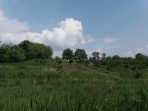 Campo verde in Serbia fotografie stock