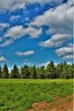 Campo verde situado em Childwold, New York, Estados Unidos foto de stock