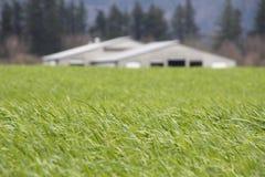 Campo verde spesso del pascolo Immagini Stock Libere da Diritti