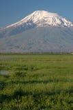 Campo verde sul fondo di Masis del supporto dal villaggio di Sis Fotografia Stock