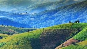 Campo verde sulla montagna Immagine Stock