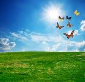 Campo verde, una mosca del gruppo della farfalla Fotografia Stock Libera da Diritti