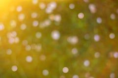 Campo verde vago vivo con il fondo di estate dei fiori fotografia stock