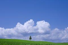 Campo verde y árbol solo Fotos de archivo