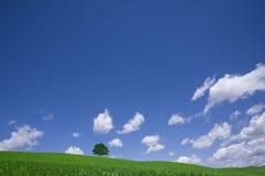Campo verde y árbol solo Imagenes de archivo