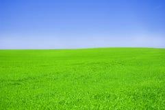 Campo verde y cielo azul. Foto de archivo