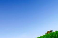 Campo verde y cielo azul Fotografía de archivo