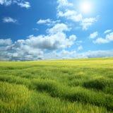 Campo verde y cielo azul Imágenes de archivo libres de regalías