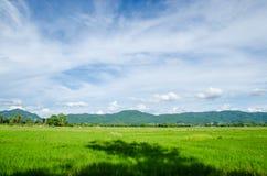 Campo verde y cielo azul Imagenes de archivo
