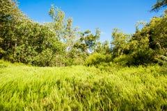 Campo verde y cielo azul Foto de archivo