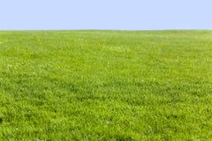 Campo verde y cielo azul imagen de archivo libre de regalías