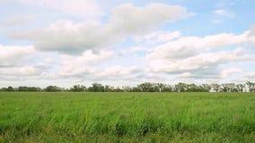 Campo verde y cielo azul con las nubes en a cámara lenta 1920x1080 metrajes