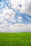 Campo verde y cielo azul con los rayos Foto de archivo libre de regalías