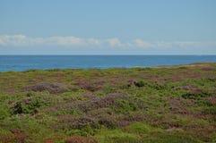 Campo verde y púrpura hermoso con el horizonte y mar cántabro en el fondo en la playa de las catedrales en Ribadeo imágenes de archivo libres de regalías