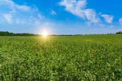 Campo verde y salida del sol hermosa Foto de archivo