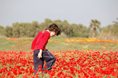 Campo vermelho Imagem de Stock