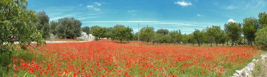Campo vermelho da papoila com trulli Foto de Stock