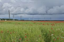 Campo vermelho das papoilas no verão imagens de stock royalty free
