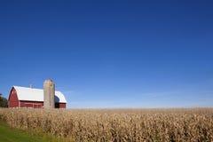 Campo vermelho do celeiro, do silo e de milho imagem de stock royalty free