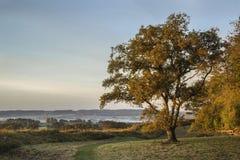 Campo vibrante bonito da floresta da paisagem do outono na manhã Imagem de Stock