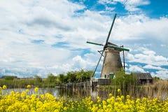 Campo vibrante das tulipas com moinhos de vento holandeses Imagem de Stock Royalty Free