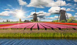 Campo vibrante dei tulipani con i mulini a vento olandesi Fotografia Stock Libera da Diritti