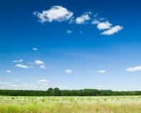 Campo vibrante dos wildflowers Fotografia de Stock