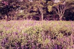 Campo violeta foto de archivo libre de regalías