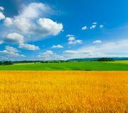 campo wheaten Fotografia Stock Libera da Diritti