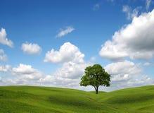 Campo y árbol verdes bajo el cielo azul Fotografía de archivo libre de regalías