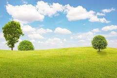 Campo y árbol verdes con el cielo azul y las nubes Fotos de archivo