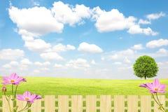 Campo y árbol verdes con el cielo azul y las nubes Foto de archivo