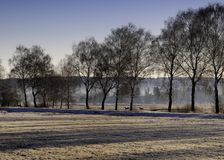 Campo y árboles en invierno Fotografía de archivo libre de regalías