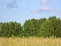Campo y bosque Foto de archivo