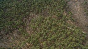 Campo y bosque con una altura Fotografía de archivo