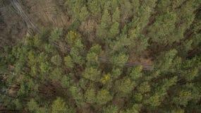 Campo y bosque con una altura Fotos de archivo