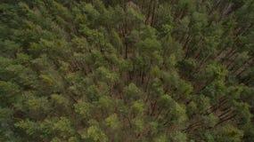 Campo y bosque con una altura Imágenes de archivo libres de regalías