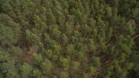 Campo y bosque con una altura Imagen de archivo
