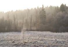 Helada del campo y del bosque en la niebla de la mañana fotografía de archivo