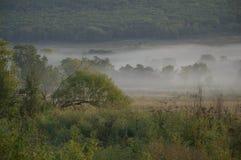 Campo y bosque en la niebla/la mañana/la naturaleza del este lejano de Rusia Imagenes de archivo