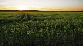 Campo y camino amarillos de la puesta del sol al cielo Imagen de archivo