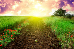 Campo y camino verdes en la puesta del sol Fotos de archivo libres de regalías