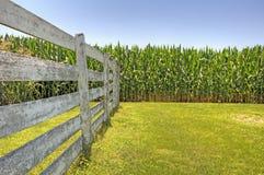 Campo y cerca de maíz Imagen de archivo libre de regalías