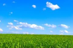 Campo y cielo foto de archivo libre de regalías