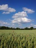Campo y cielo Fotografía de archivo libre de regalías