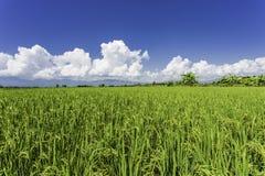 Campo y cielo azul Imagen de archivo
