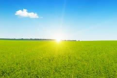 Campo y cielo azul Fotos de archivo