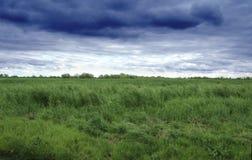 Campo y cielo de hierba Imagen de archivo libre de regalías