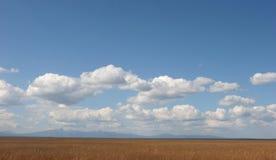 Campo y cielo de hierba foto de archivo libre de regalías